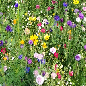 Western<br/> Wildflower Seed Mix