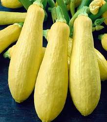 Squash - Early Prolific Straightneck Seeds