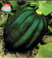 Squash - Table King Seeds