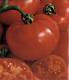 Tomato - Best Boy Seeds
