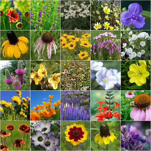 Xeriscape <br/> Wildflower Seed Mix