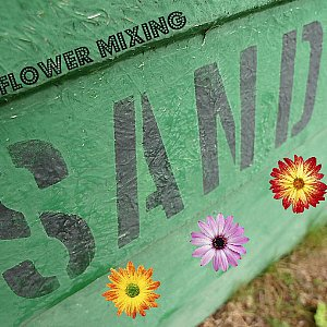 Wildflower Mixing Sand