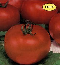 Tomato - Oregon Spring Seeds