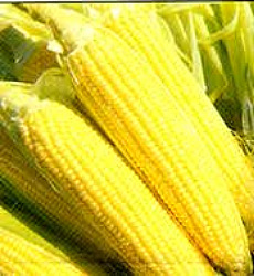 Sweet Corn - Golden Cross Seeds