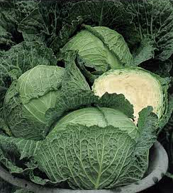 Cabbage - Savoy Perfection Seeds