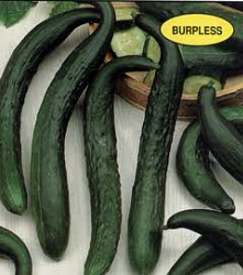 Cucumber - Japanese Long Seeds