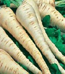 Parsnip - Hollow Crown Seeds