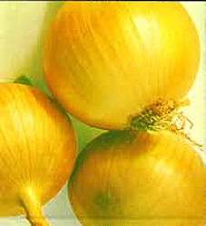 Onion - Sweet Spanish Seeds