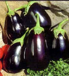 Eggplant - Black Beauty Seeds