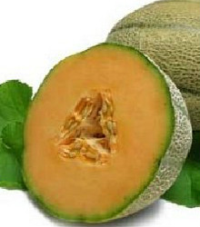 Muskmelon - Delicious 51 Seeds