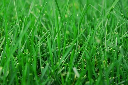 Conservation Grass Seed Mix