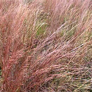 Native Grass Seed Mix