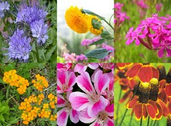 Wildflower Seed Combo Deals