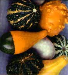 Gourds - Ornamental Mix Seeds