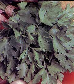 Parsley - Plain Leaf Seeds