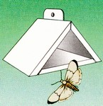 Moth & Fly Traps