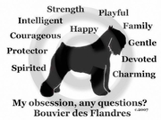 Bouvier des Flandres Obsession T-Shirt