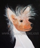 Chinese Crested Original Artwork Greeting cards - Set of Five
