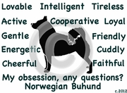 Norwegian Buhund Obsession Long Sleeve Tshirt