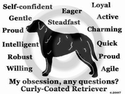 Curly-Coated Retriever Obsession T-Shirt
