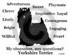 Yorkshire Terrier Obsession Long Sleeve T-Shirt