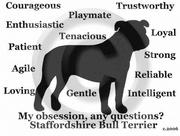 Staffordshire Bull Terrier Obsession Long Sleeve T-Shirt