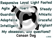 Canaan Dog Obsession T-Shirt