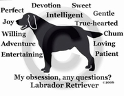 Labrador Retriever Obsession Sweatshirt