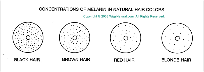 Depth and Levels of Color, Oxidative Haircolors