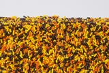 Autumn Sprinkles (4 Pound Bag)