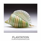 Sanibel Glass Shell | Green Swirl
