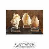 Captiva Shells | Set of 3