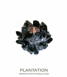 Classic Votive | Smoky Black Quartz