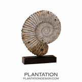 Mounted Ammonite
