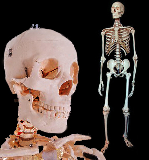 Human Skeletons Discounted