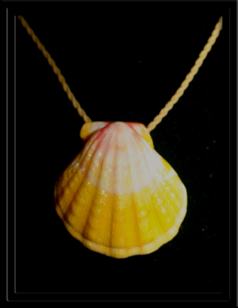 Yellow  White & Pink Large Sunrise Shell Natural Cord Necklace