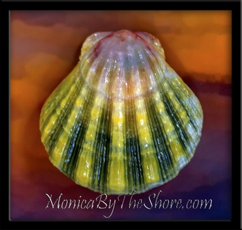 "YouTube Video ""Hawaiian Sunrise Shells by MonicaByTheShore"""