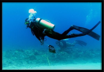 HAWAII ADVENTURE DIVING SCUBA DIVING CHARTERS