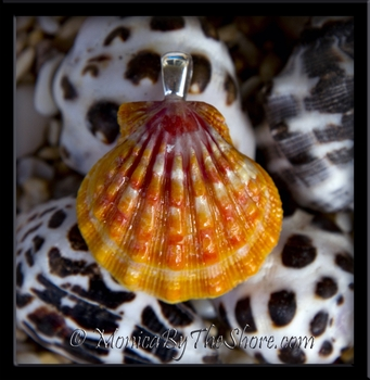 Pink & Tangerine Hawaiian Sunrise Shell Pendant with Sterling Silver Bale