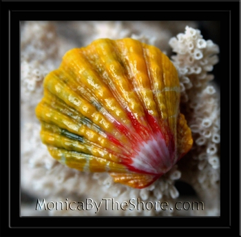 Strong Pink Gold Green Sunrise Shell Pendant