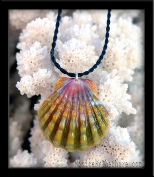 Green Rainbow Sunrise Shell & Twisted Cord Necklace