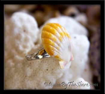 Toe Ring! Yellow & White Hawaiian Sunrise Shell Sterling Silver