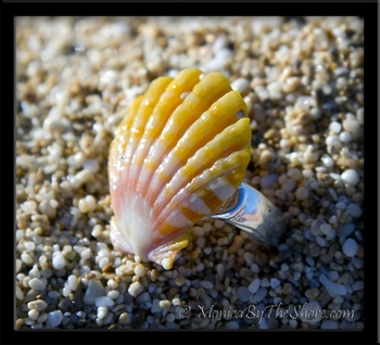Pink & Yellow Hawaiian Sunrise Shell Sterling Silver Toe Ring