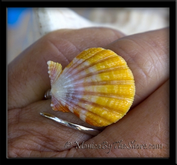 Yellow Pink White Hawaiian Sunrise Shell Silver Wrap Ring