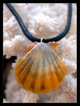 White & Yellow Sunrise Shell & Leather Cord Necklace