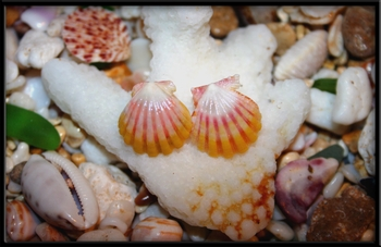 Childs Hawaiian Sunrise Shell 14k Gold Post Earrings