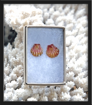 Keiki Hawaiian Sunrise Shell Gold Post Earrings