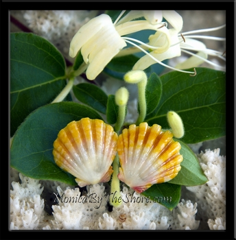 Bright Yellow & White Baby Sunrise Shell Post Earrings