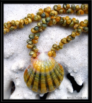 Lemon Lime Hawaiian Sunrise Shell & Tahitian Mongo Shell Lei Necklace