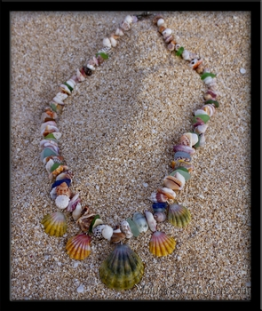 "Commission for ""Palapala"" Five Sunrise Shell 24"" Seashell Love Beach Candy Lei Aloha"
